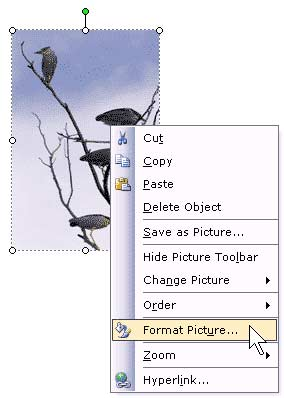 Recolor Images in PowerPoint