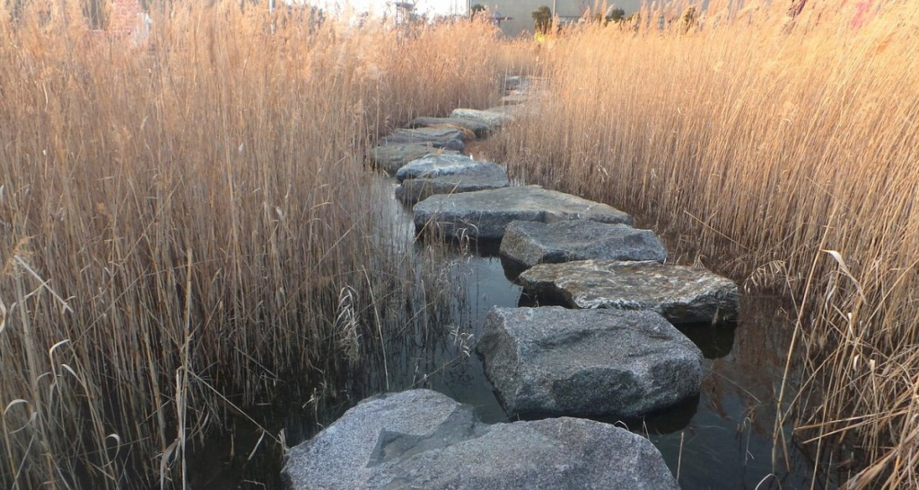 Stepping Stones Reed