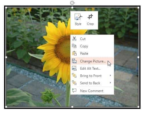Change Picture in PowerPoint Online